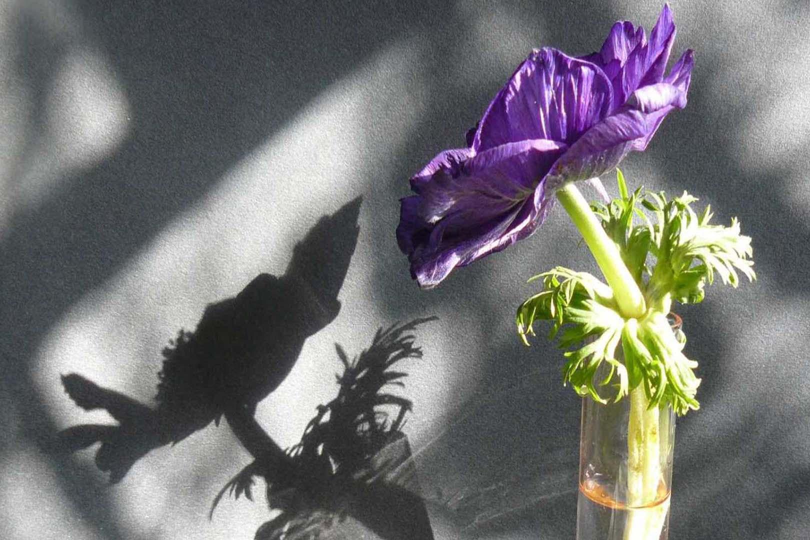 Fleurs-07