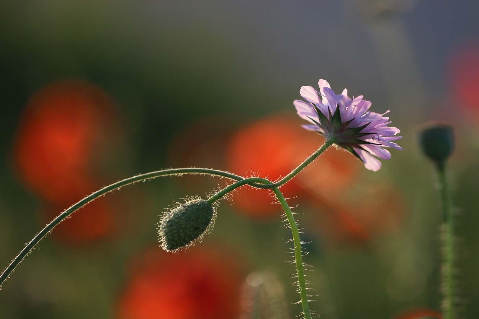 Fleurs-12